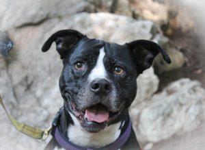 One Veteran's Life Saving Service Dog Tara